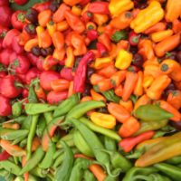 Locally grown peppers from Weiser Family Farms